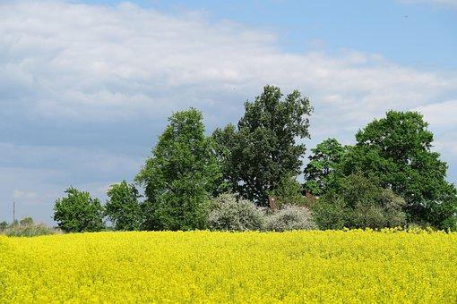 Rapeseed, Oilseed Rape, Yellow Field, Landscape
