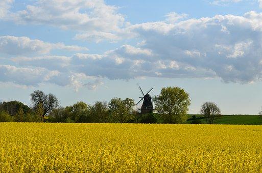 Oilseed Rape, Field Of Rapeseeds, Windmill, Yellow
