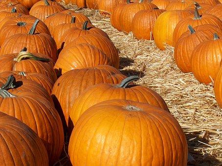 Pumkins, Patch, Orange, Halloween, Pumpkin, Harvest