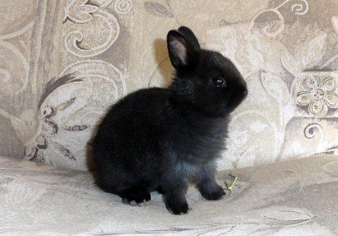One, Black, Bunny, Easter, Portrait, Sweet, Cute