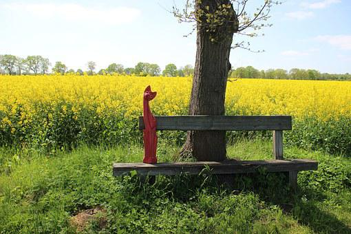 Field Of Rapeseeds, Yellow, Oilseed Rape, Blossom
