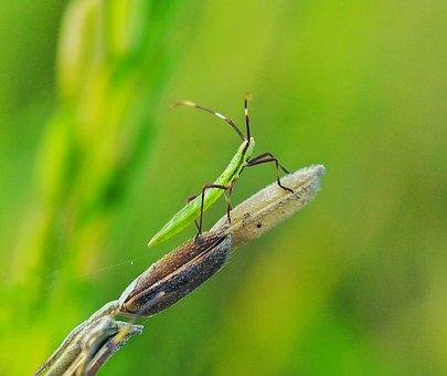 True Bugs, Small, Macro, Best Macro