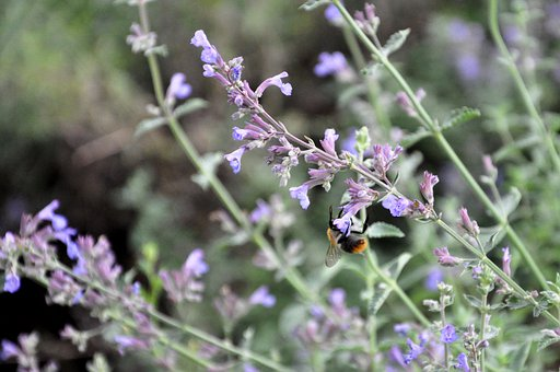 Bee, Wild Flower, Insect, Nature, Bloom, Meadow, Plant