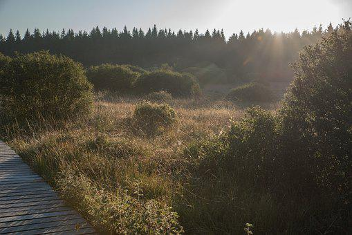 Boardwalk, Shrubs, Grass, Trees, Conifers, Coniferous