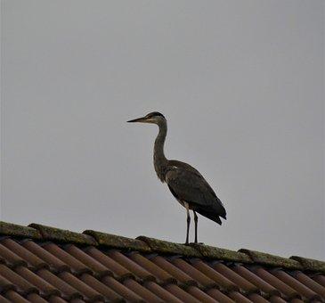 Stork, Roof, Animal, Rattle Stork