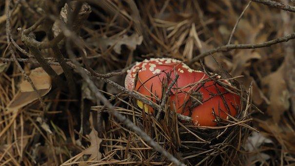 Autumn, Boletus, Fungus Bracket, Ecosystem, Food