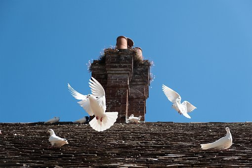 Doves, Dove, Birds, Chimney, Pigeon, Peace, Nature