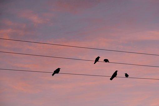 Telegraph Wires, Nature, Wildlife, Perched, Bird