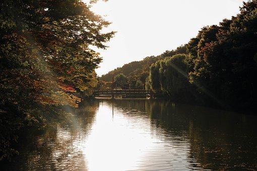 River, Banks, Bridge, Trees, Sunlight, Sunrays