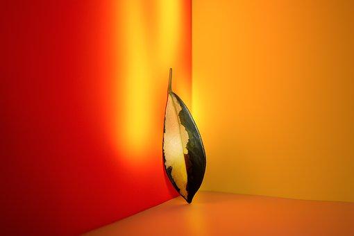 Light, Sun, Abtsrakt, Ray Aralia, Plant, Leaf, Standing