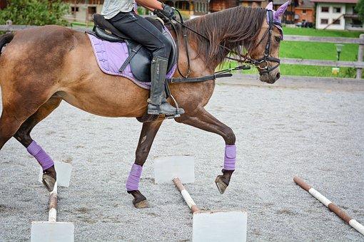 Horse, Pony, Trot Poles, Pole Training, Reiter, Ride