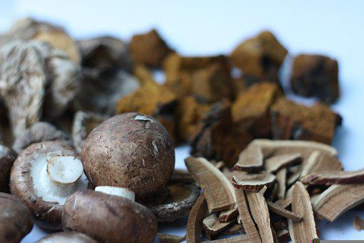 Mushrooms, Medicinal Mushrooms, Reishi Mushroom, Reishi