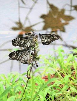Butterflies, Insects, Wings, Butterfly Wings