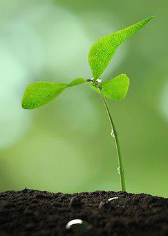 Plant, Sapling, Growth, Growing, Growing Plant, Soil