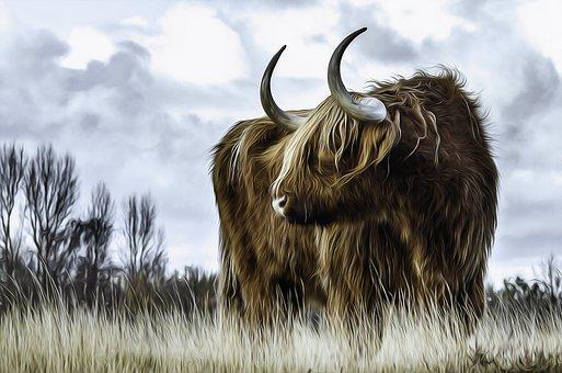 Bull, Cow, Cattle, Animal, Longhorn, Livestock, Beef