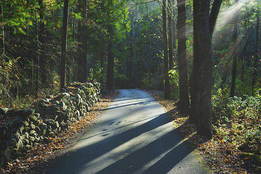 Woods, Road, Stone, Cobblestone, Fence, Light, Trail