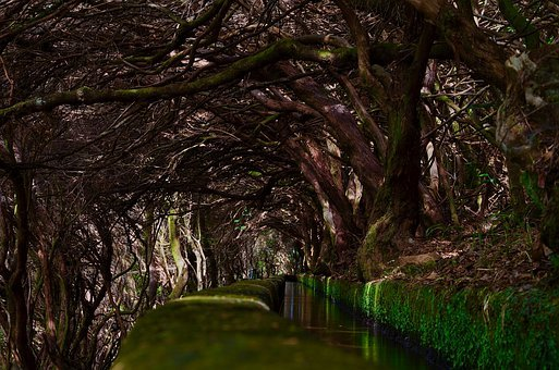 Forest, Moss, Trees, Waterway, Wateracourse
