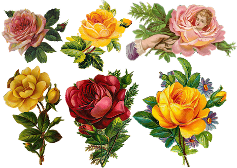 Roses, Flowers, Petals, Leaves, Bouquet, Collage