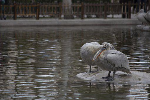Isfahan, Birds, Iran, Travel, Tourism, Zoo, Urbanism