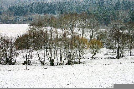 Snow, Fields, Trees, Conifers, Conifer Forest