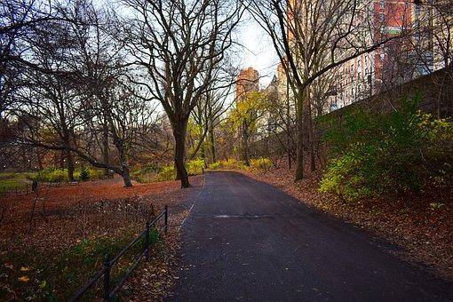 Central Park, Road, City, Trees, Buildings, Pavement