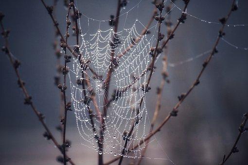 Web, Dew, Forest, Morning Dew, Droplets, Dewdrops