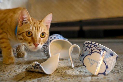Cat, Pet, Broken Cup, Shards, Tabby, Kitty, Animal