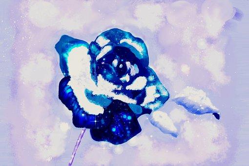 Frosty Blue Rose, Flower, Rose, Blue, Plant