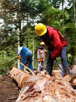 Debarked, Workers, Forest, Deforestation, Men, Work