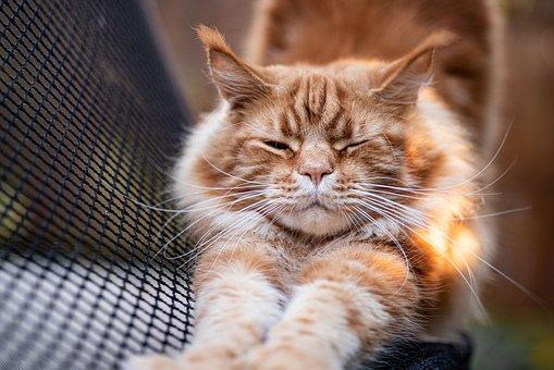 Cat, Tabby, Stretching, Orange Tabby, Stretch, Pet