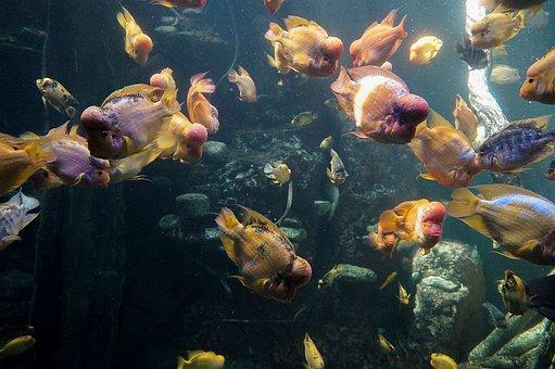 Fish, Aquarium, Water, Swim, Sea aquarium