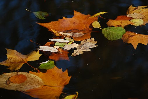 Autumn, Leaves On Water, Fall Foliage, Colorful