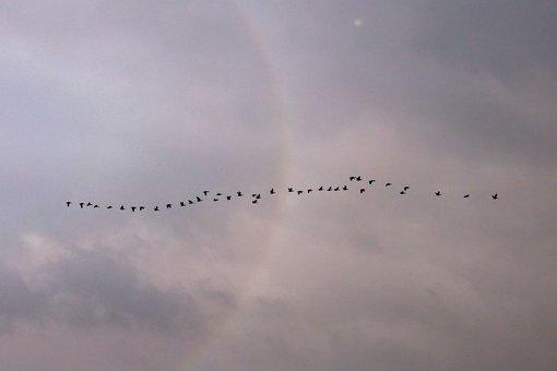 Clouds, Birds, Flight, Fly, Water Bird, Flock Of Birds