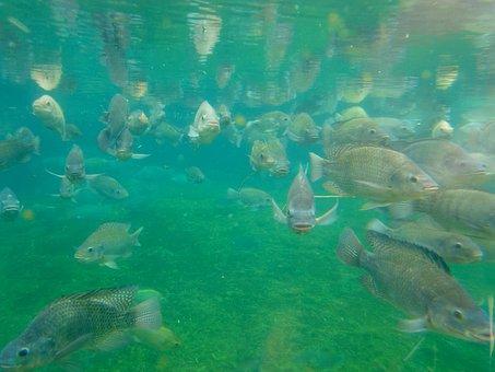 Fish, Fish Farming, Aquarium, Underwater