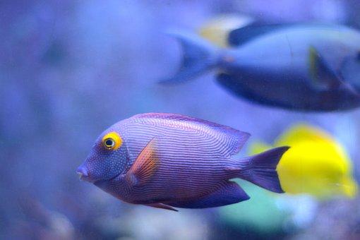 Fish, Sea, Water, Underwater, Fish Swarm