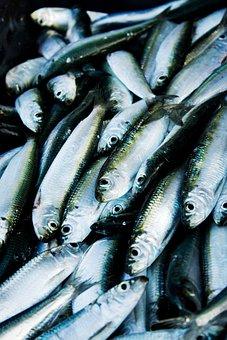 Herring, Fish, Port, Fishing, Sea, Lake, Fishing Boats