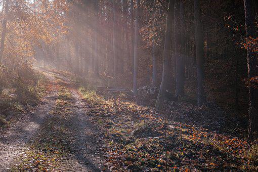 Forest, Fog, Sunday Rays, Forest Path, Colourless