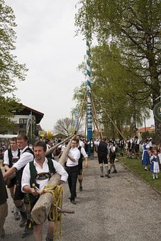 Maypole, Decorated, Log, Setting Up, Fraternity, Men