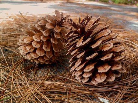 Pineapple, Nature, Seed, Leaves, Pine Needles