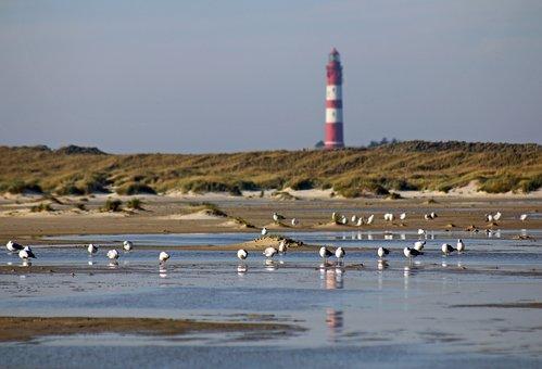 Lighthouse, Gulls, Water, Mood, Sky, Sea, Maritime