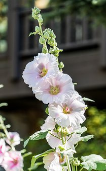 Flowers, Garden, Lupine, Close Up, Nature, Green