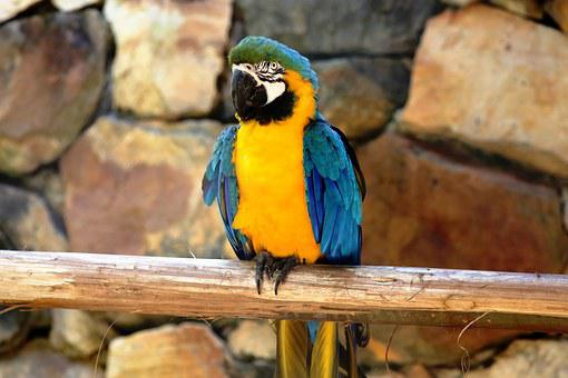Macaw In The Natural Background Of Rocks, Bird