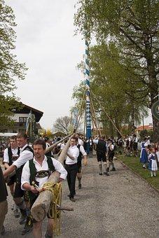 Maypole, Decorated, Log, Setting Up, Fraternity, Men