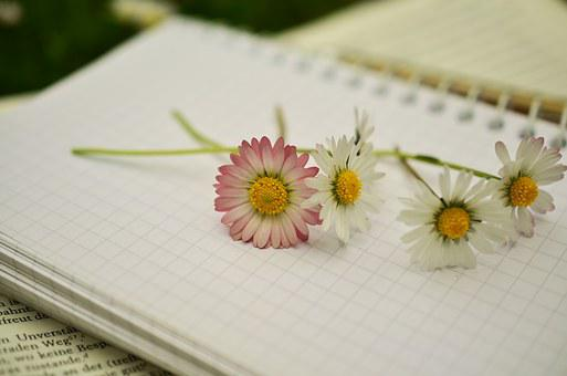 Notebook, Book, Book Pages, Paper, Blank Pages, Write