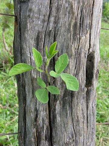 Nature, Green Branch On Fence Post, Pedro, Nunes