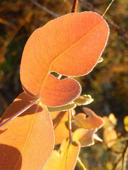 Dew, Leaf, Nature, Floiage, Plant