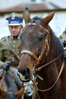 The Horse, Cavalryman, Soldier, Cavalry, Independence