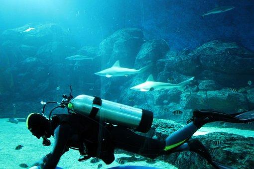 Diver, Man, People, Aquarium, Shark, Water, Tank