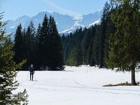Skiing, Cross Country Skiing, Ski, Winter, Mountains