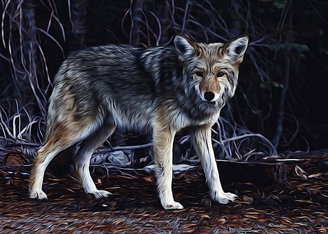 Wolf, Canine, Predator, Mammal, Creature, Wildlife